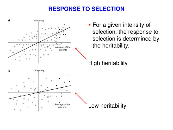 RESPONSE TO SELECTION