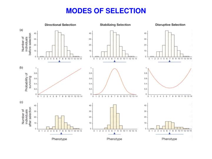 MODES OF SELECTION