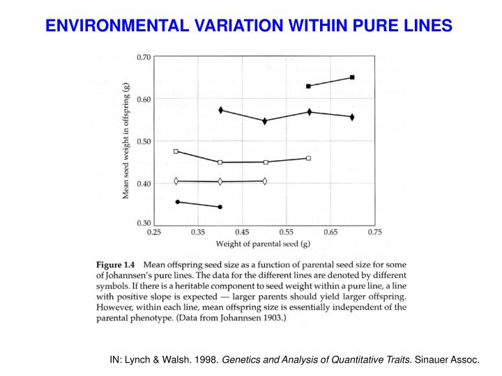 ENVIRONMENTAL VARIATION WITHIN PURE LINES