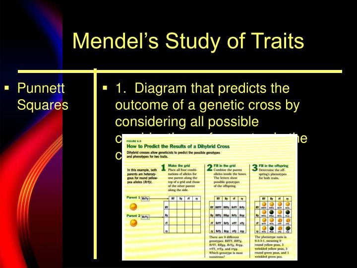 Mendel s study of traits