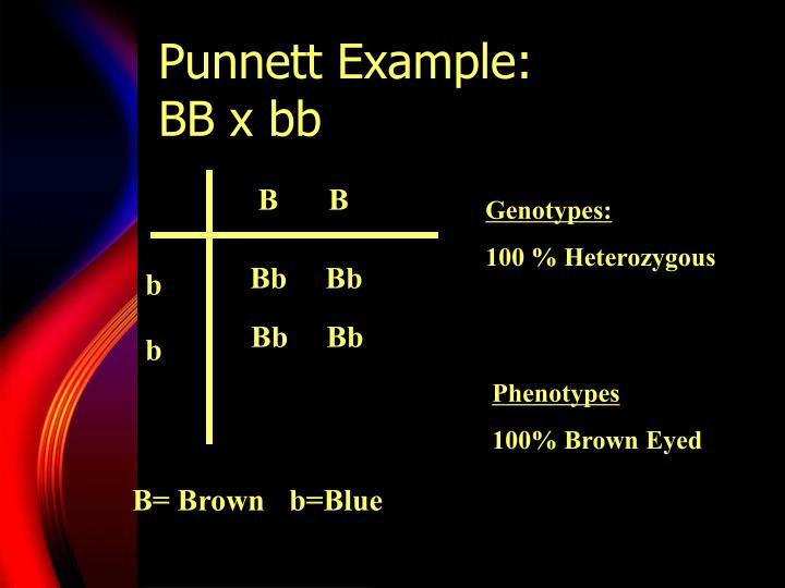 Punnett Example: