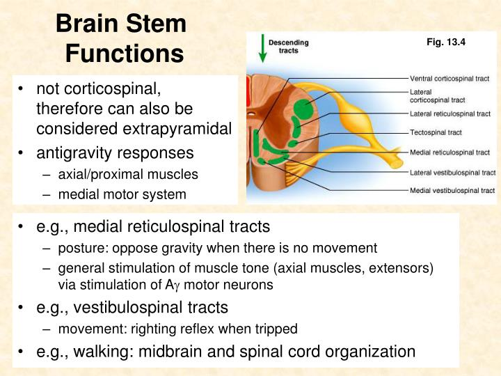 not corticospinal, therefore can also be considered extrapyramidal