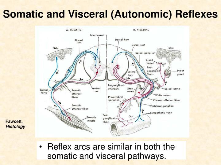 Somatic and Visceral (Autonomic) Reflexes