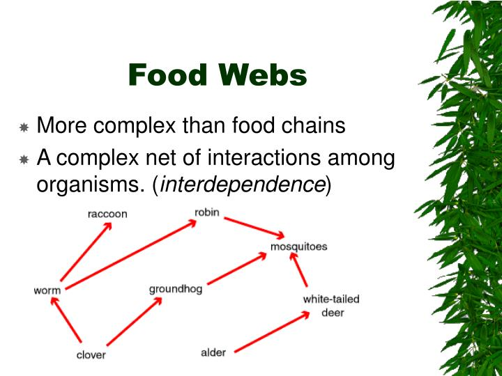 More complex than food chains