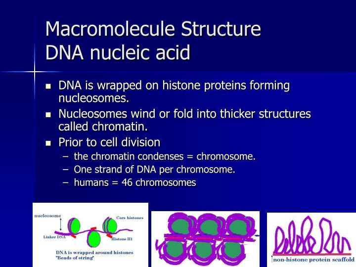 Macromolecule structure dna nucleic acid