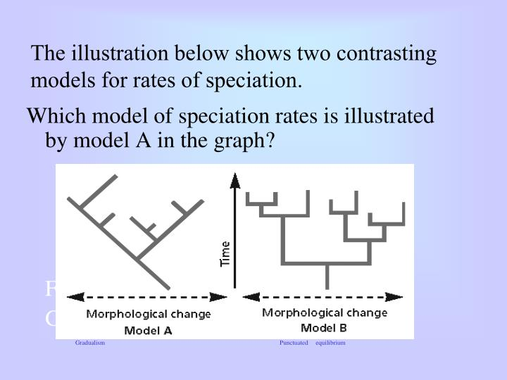 The illustration below shows two contrasting models for rates of speciation.
