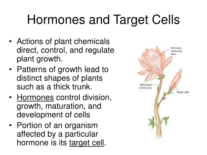 Hormones and target cells