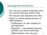development of neurons