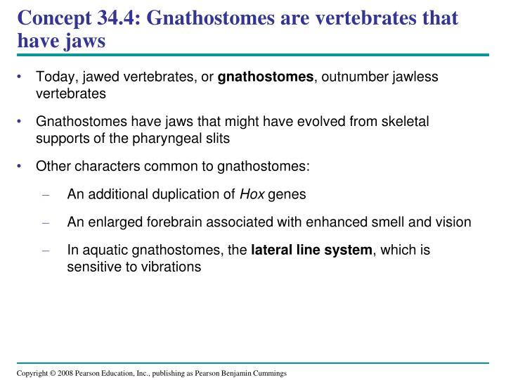 Concept 34.4: Gnathostomes are vertebrates that have jaws