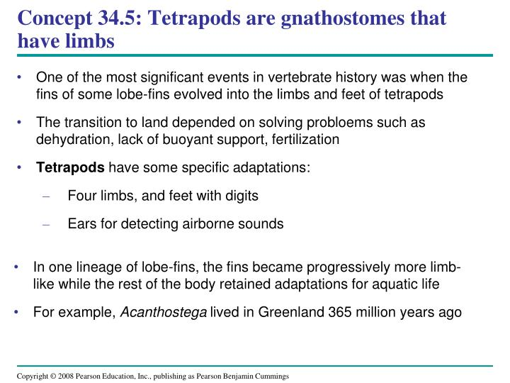 Concept 34.5: Tetrapods are gnathostomes that have limbs