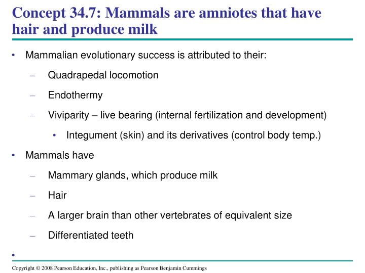 Concept 34.7: Mammals are amniotes that have hair and produce milk