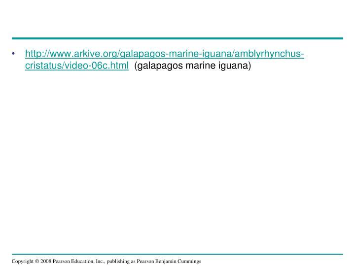 http://www.arkive.org/galapagos-marine-iguana/amblyrhynchus-cristatus/video-06c.html