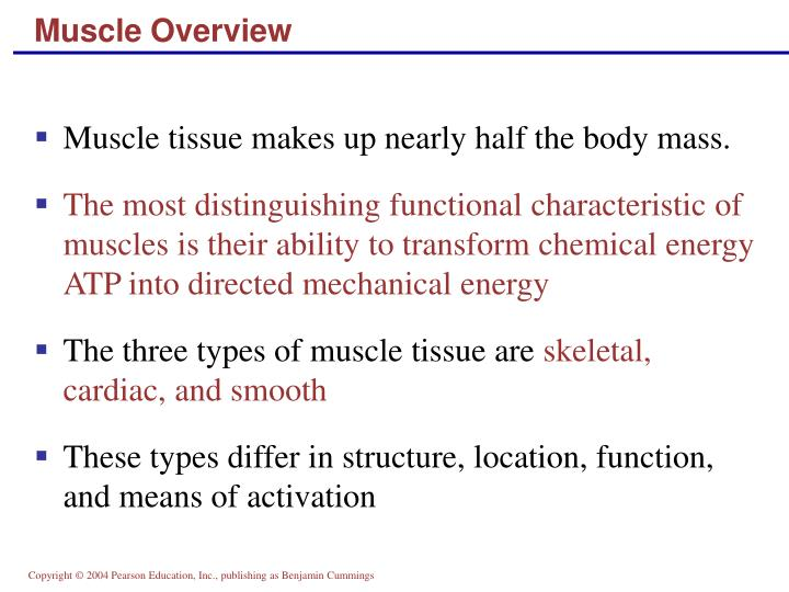 Muscle overview