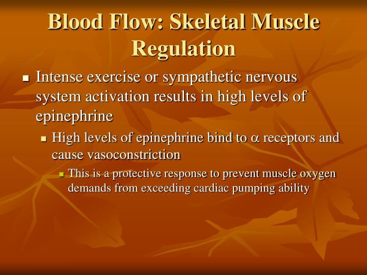 Blood Flow: Skeletal Muscle Regulation