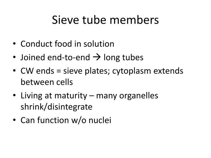 Sieve tube members