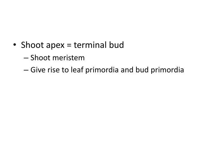 Shoot apex = terminal bud