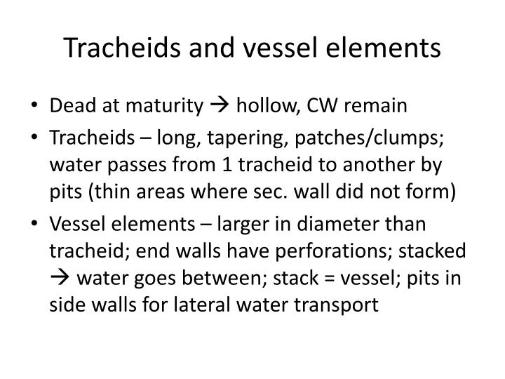 Tracheids and vessel elements