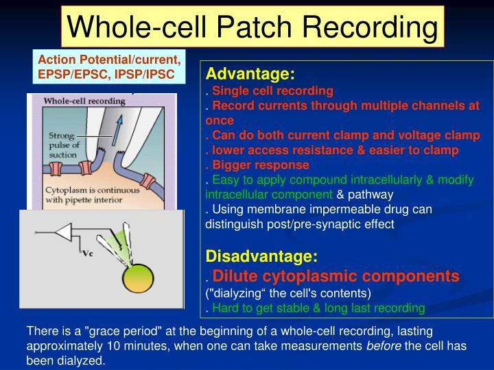 Whole-cell Patch Recording