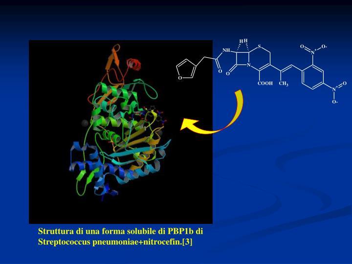 Struttura di una forma solubile di PBP1b di Streptococcus pneumoniae+nitrocefin.[3]