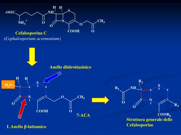 Cefalosporina C