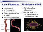 axial filaments