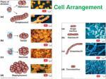cell arrangement