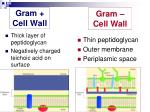 gram cell wall