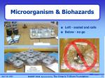microorganism biohazards2