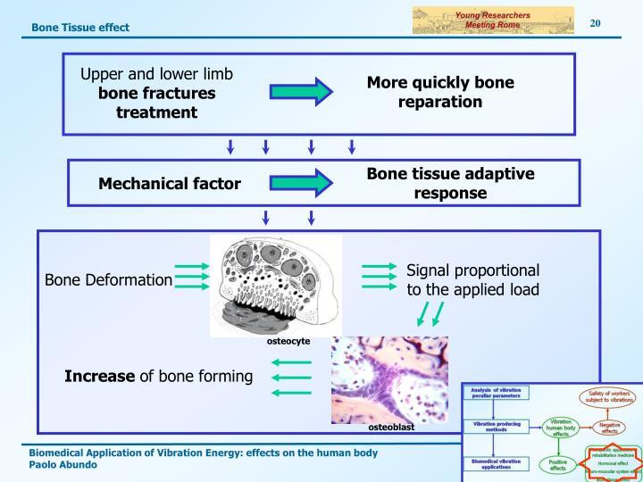 Bone Tissue effect