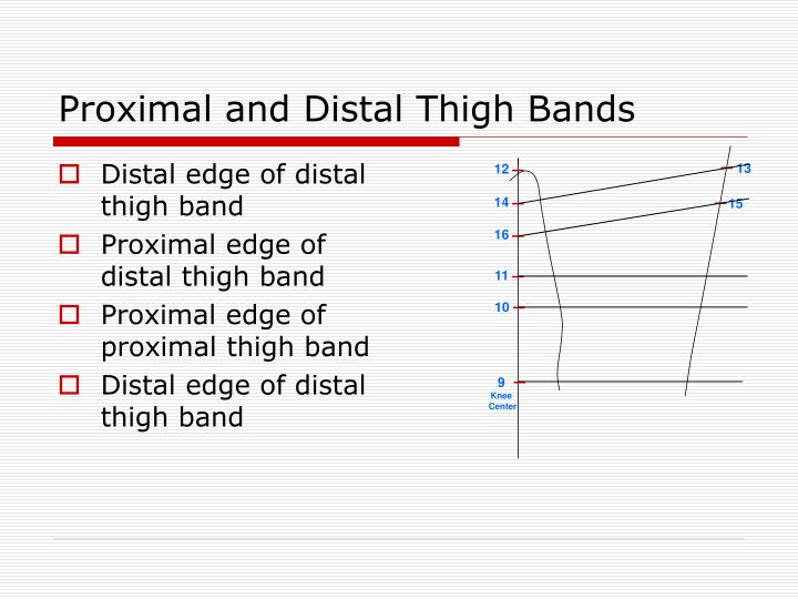 Proximal and Distal Thigh Bands