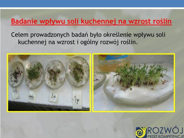 Badanie wpływu soli kuchennej na wzrost roślin