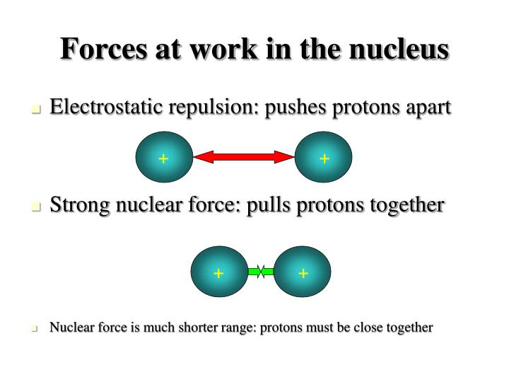 Forces at work in the nucleus