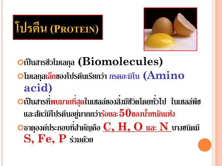 โปรตีน