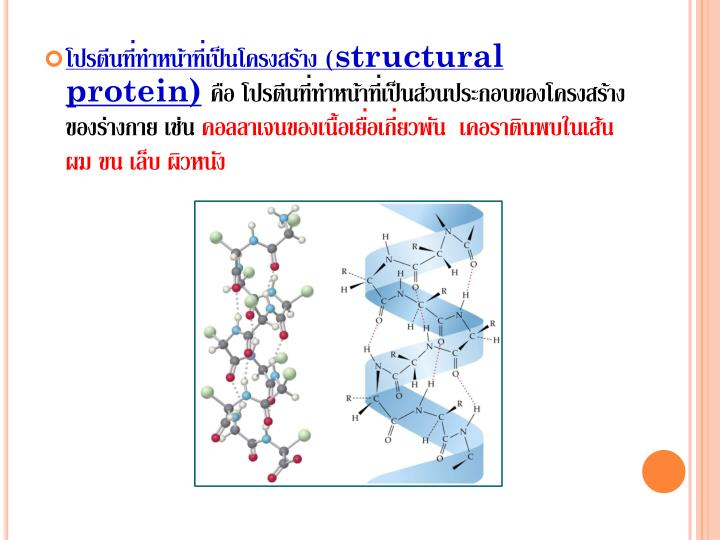 โปรตีนที่ทำหน้าที่เป็นโครงสร้าง (