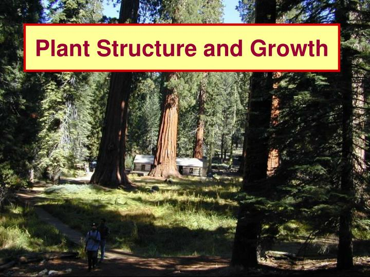 plant structure and growth n.