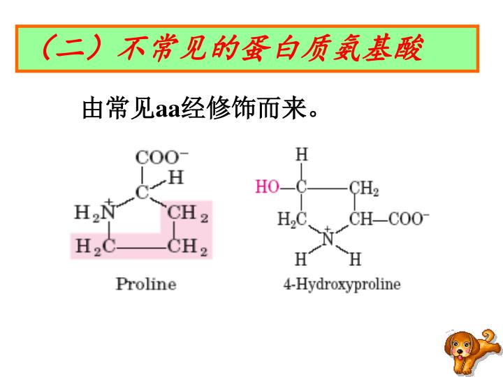 (二)不常见的蛋白质氨基酸