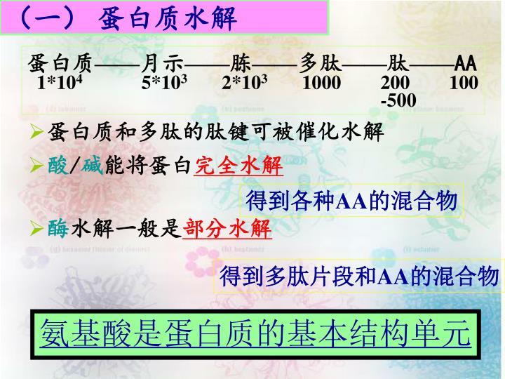 (一) 蛋白质水解