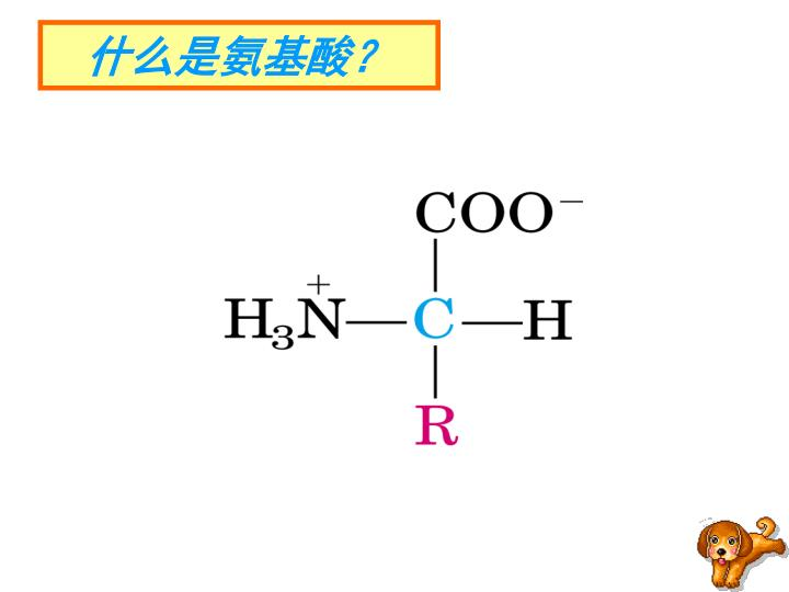 什么是氨基酸?