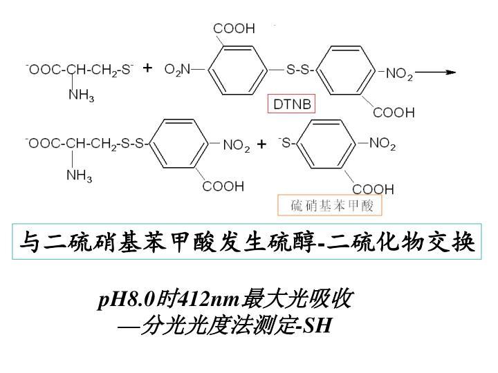与二硫硝基苯甲酸发生硫醇
