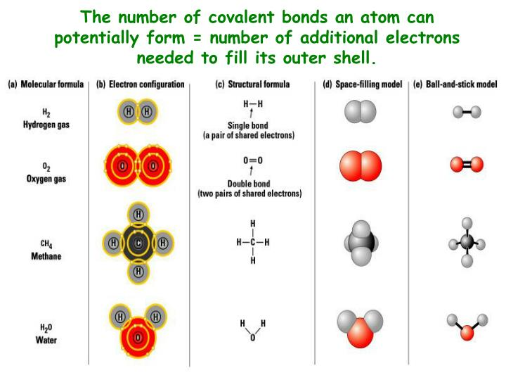 The number of covalent bonds an atom can