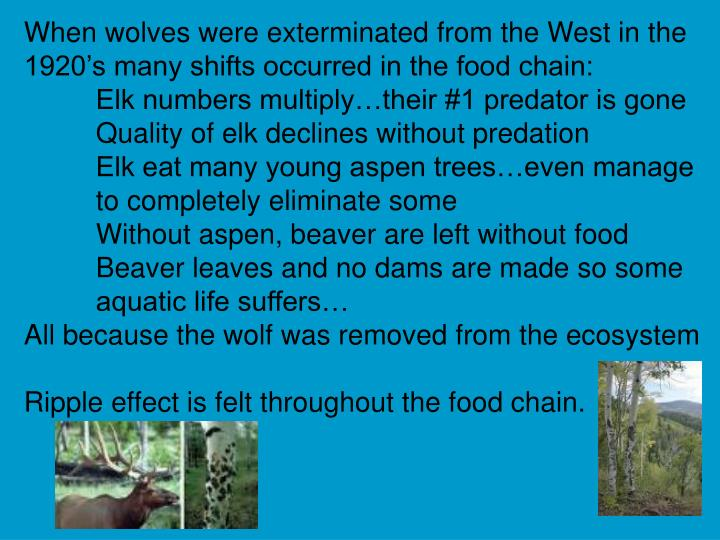 When wolves were exterminated from the West in the