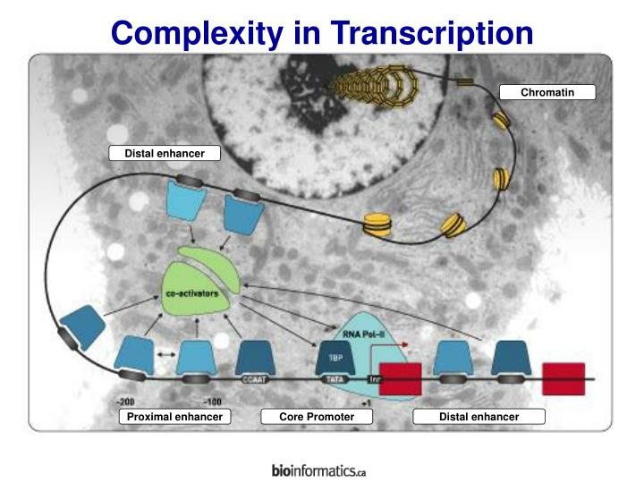 Complexity in Transcription