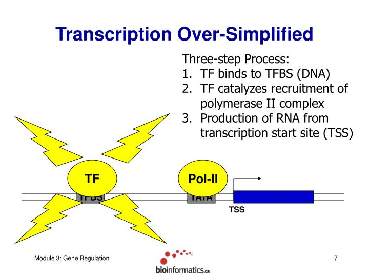 Transcription Over-Simplified