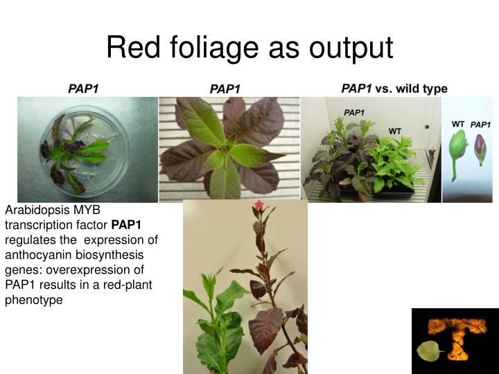 Red foliage as output