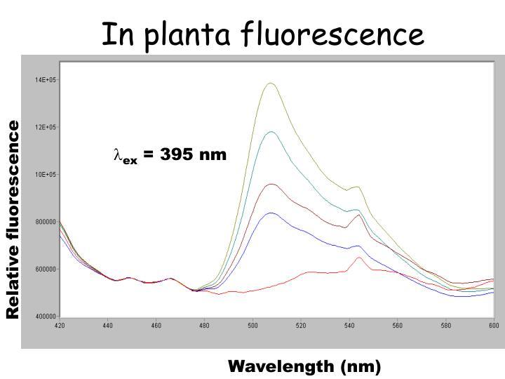 In planta fluorescence