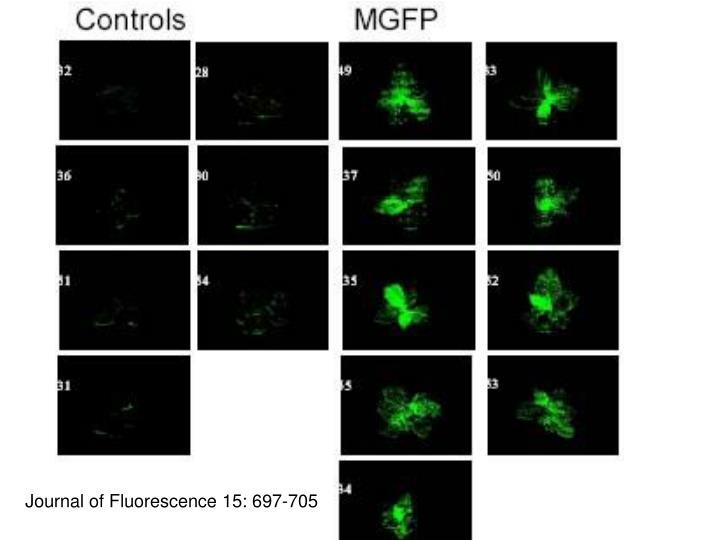 Journal of Fluorescence 15: 697-705