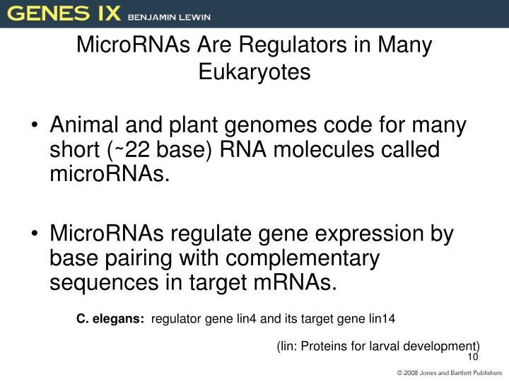 MicroRNAs Are Regulators in Many Eukaryotes