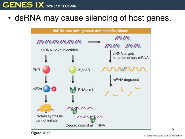 dsRNA may cause silencing of host genes.