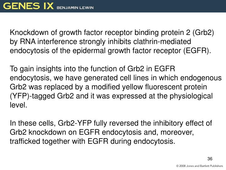 Knockdown of growth factor receptor binding protein 2 (Grb2)