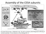 assembly of the cesa subunits